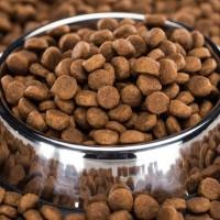 Gyvūnų maistas